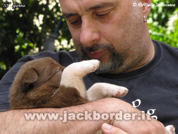 33g_cuccioli_bordercollie_08