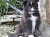 cuccioli_Pascia_08