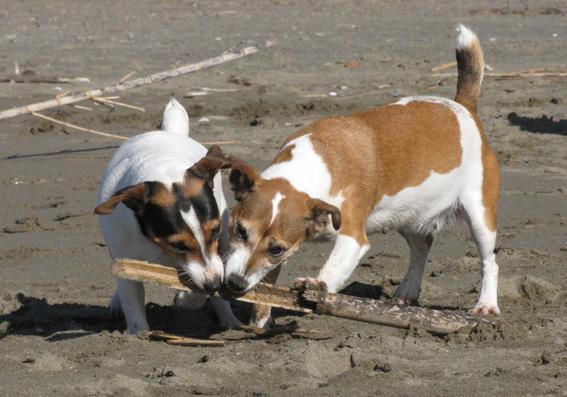 Stringa e Dixie sulla spiaggia.