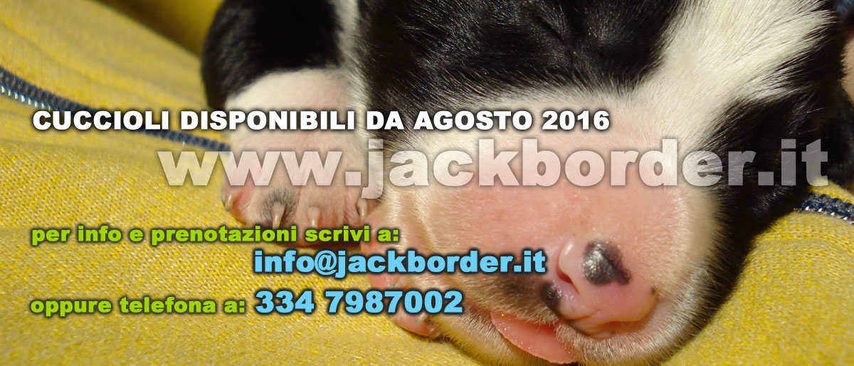 footer_sito_jackborder_004
